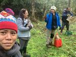 Culture staff collect nettles